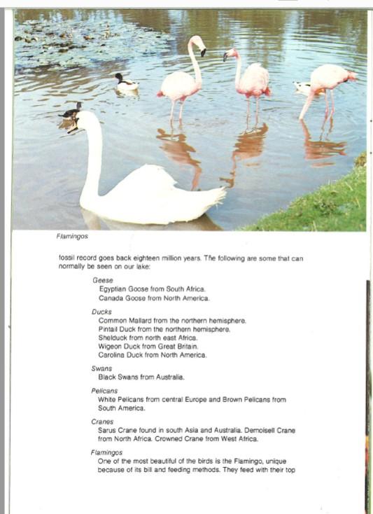 1970s guidebook waterfowl flamingo